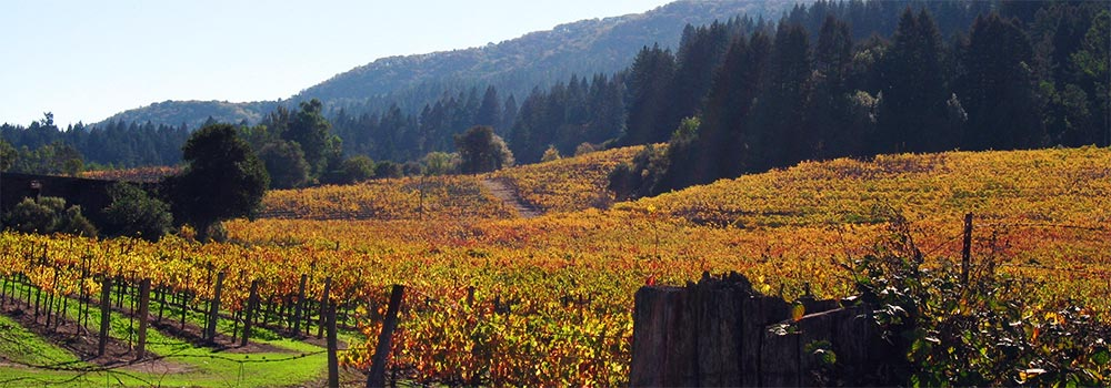 Dr Kristen Yee - Wine Country Landscape